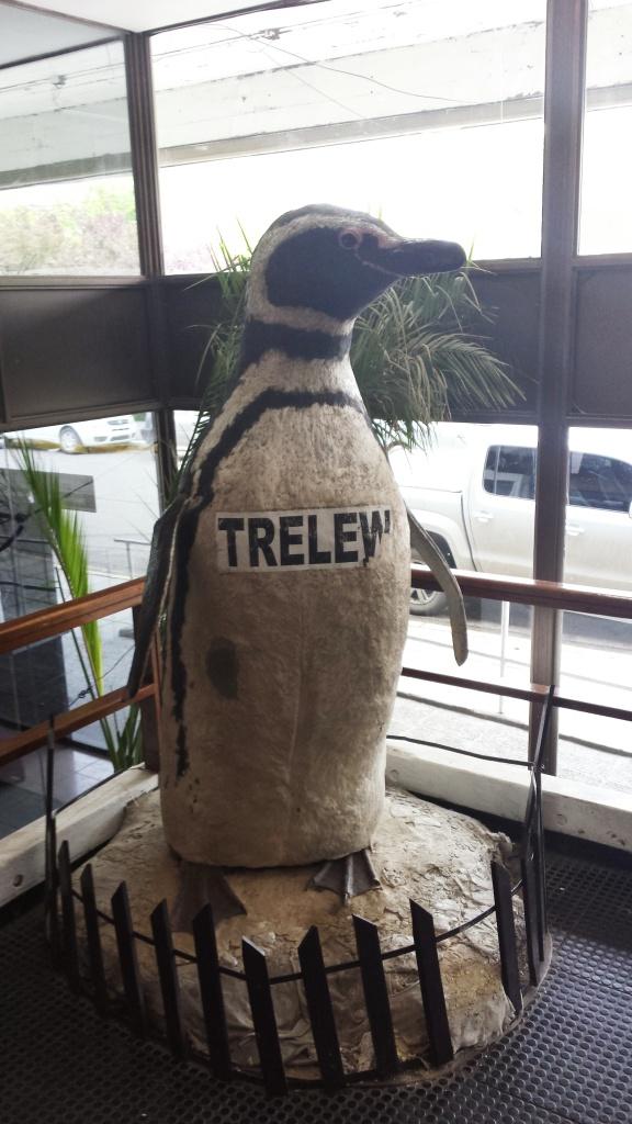 El pinguino de Trelew!