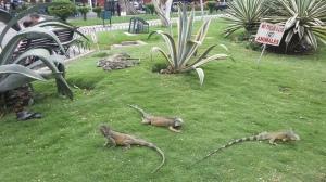 Igunes - Parque Seminario