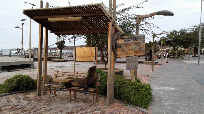 Otarie sur un banc - San Cristobal