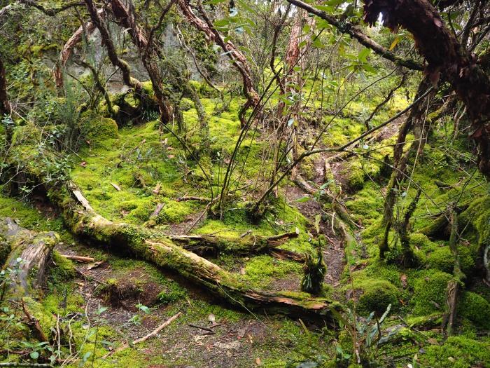 Parque Nacional Cajas - Bosque San Luis