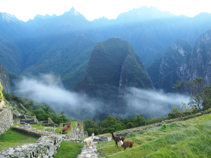 Notre arrivée au Machu Picchu