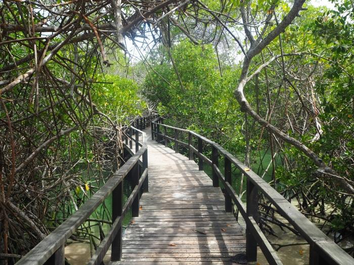 Ponton d'accès à Concha y Perla - Santa Cruz