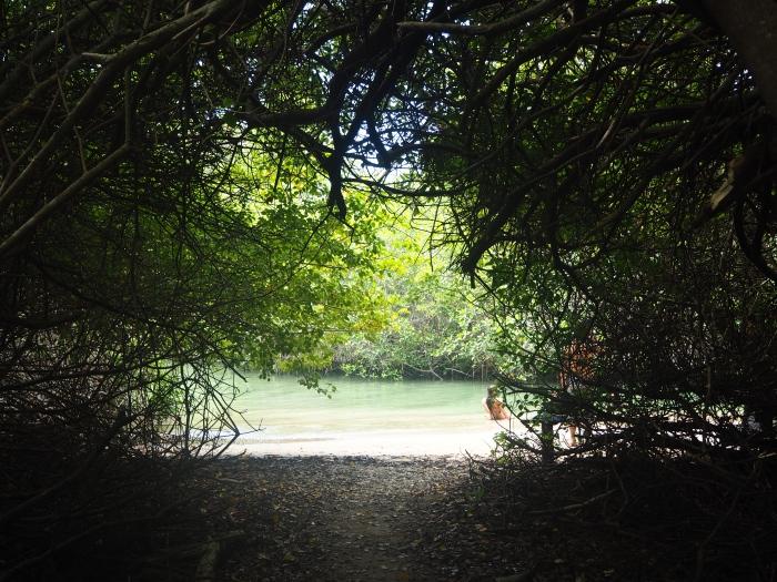 Plage cachée au milieu de la mangrove