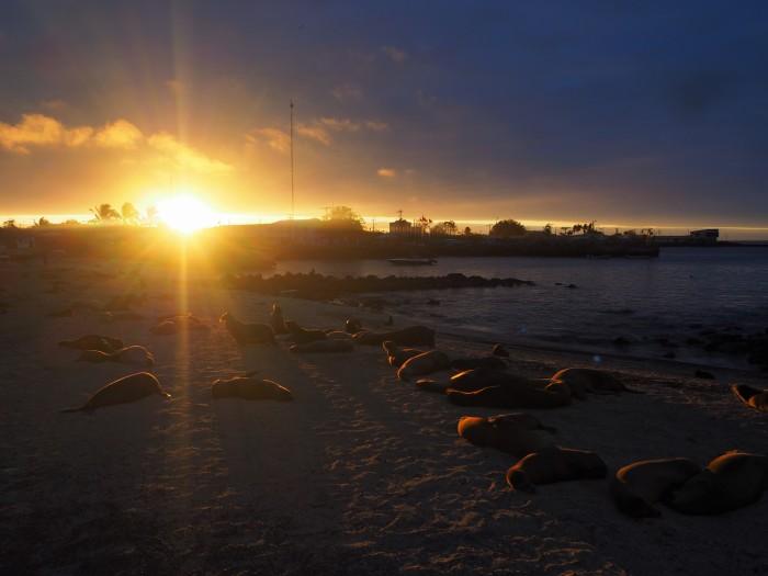 Otaries sur la plage de la ville - San Cristobal