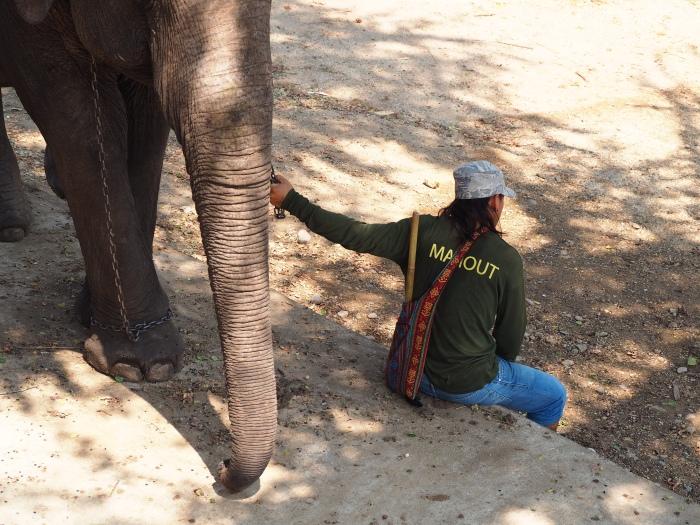 ElephantsWorld